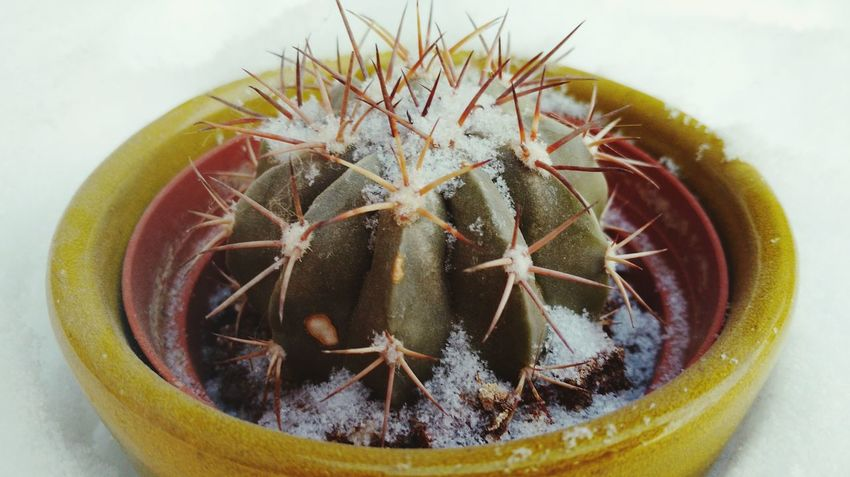 EyeEm Selects Thorn Plant Nature Close-up Cactus No People Growth