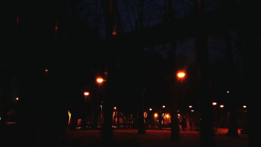 EyeEm Best Shots Night Photography Night Lights Shooting In The Dark Brunches Artificial Lights In The Night EyeEm Gallery Cool Lights Treees Trees And Light Learn & Shoot: After Dark Park In The Dark Park Italy