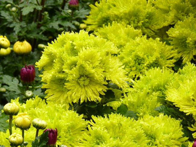 Aleq Beauty In Nature Bouquet Close-up Day Flower Flower Arrangement Flower Head Flowering Plant Fragility Freshness Green Color Growth Inflorescence Nature No People Outdoors Park - Man Made Space Petal Plant Vibrant Color Vulnerability  Yellow