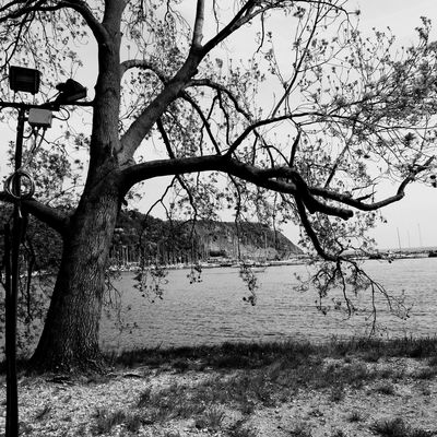 Peacefulness Peace Albero Blackandwhite Porto Water Photo Taking Photos