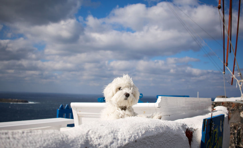 Close-up of white dog by sea against sky