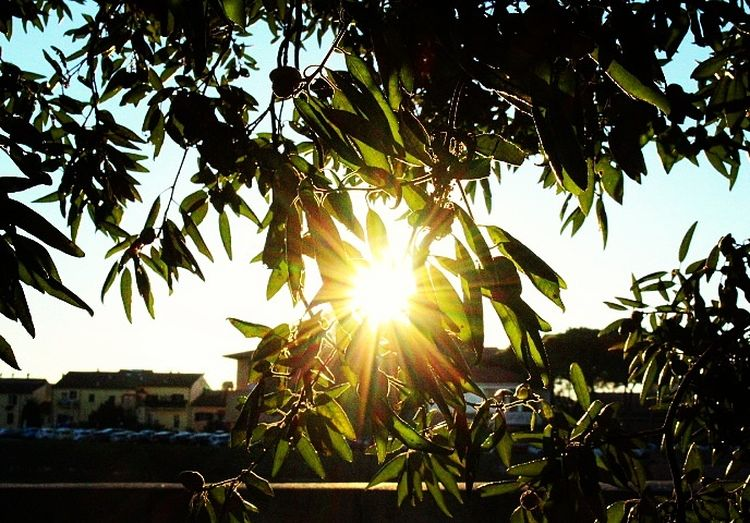 Sun Sunlight Sunbeam Lens Flare Nature Leaf Growth Sunset Beauty In Nature Tree No People Day Light And Shadow Darkness Sedness Sky And Clouds Reflection Beautiful Couds And Sky Lifestyles Sky Outdoors Architecture Pisa, Italy Lightning Storm