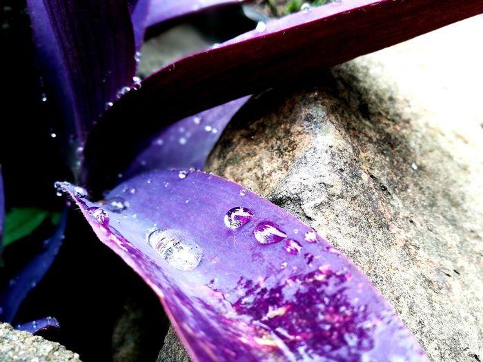 Drops Dew Drops