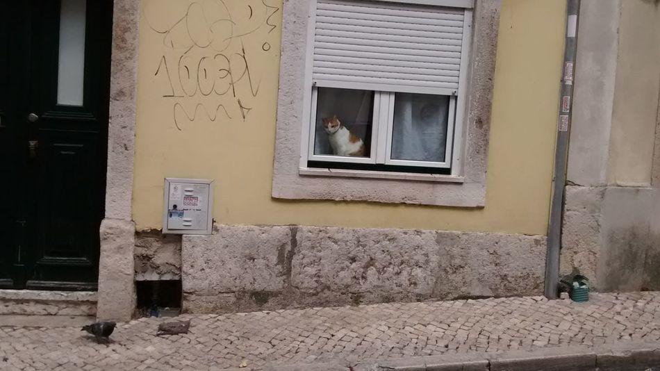 Bird Building Exterior Cat Cat Looking Through Window Cat Watching Bird Graffiti Local Life Narrow Alleys Narrow Street Old House Pigeon Portugal Window
