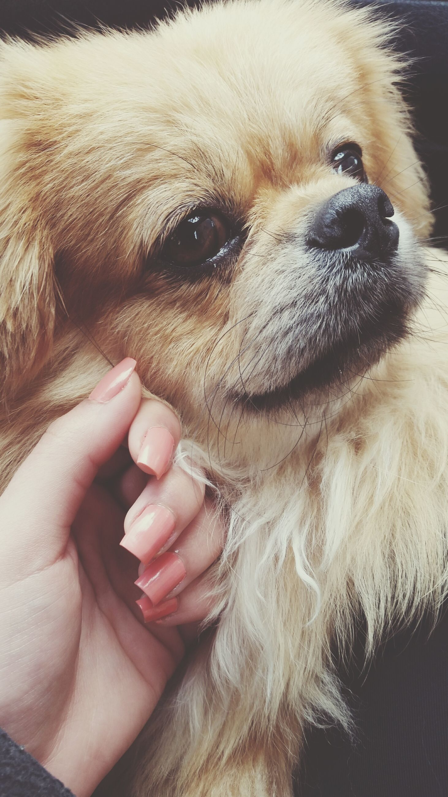 one animal, animal themes, dog, pets, domestic animals, mammal, part of, person, close-up, animal head, cropped, animal body part, portrait, lifestyles, holding, pet owner, unrecognizable person