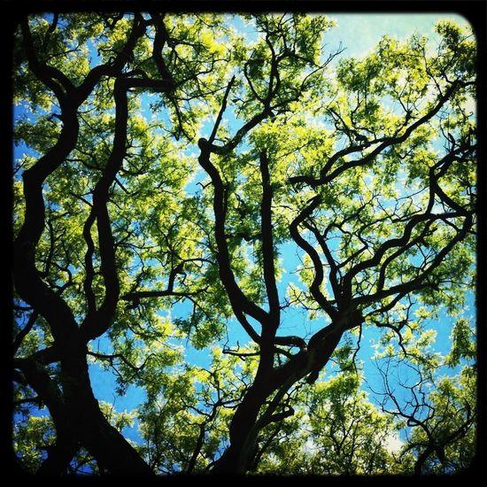 #cordoba #nature