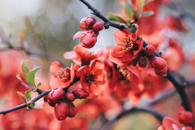 Close-up of red flowers growing on tree