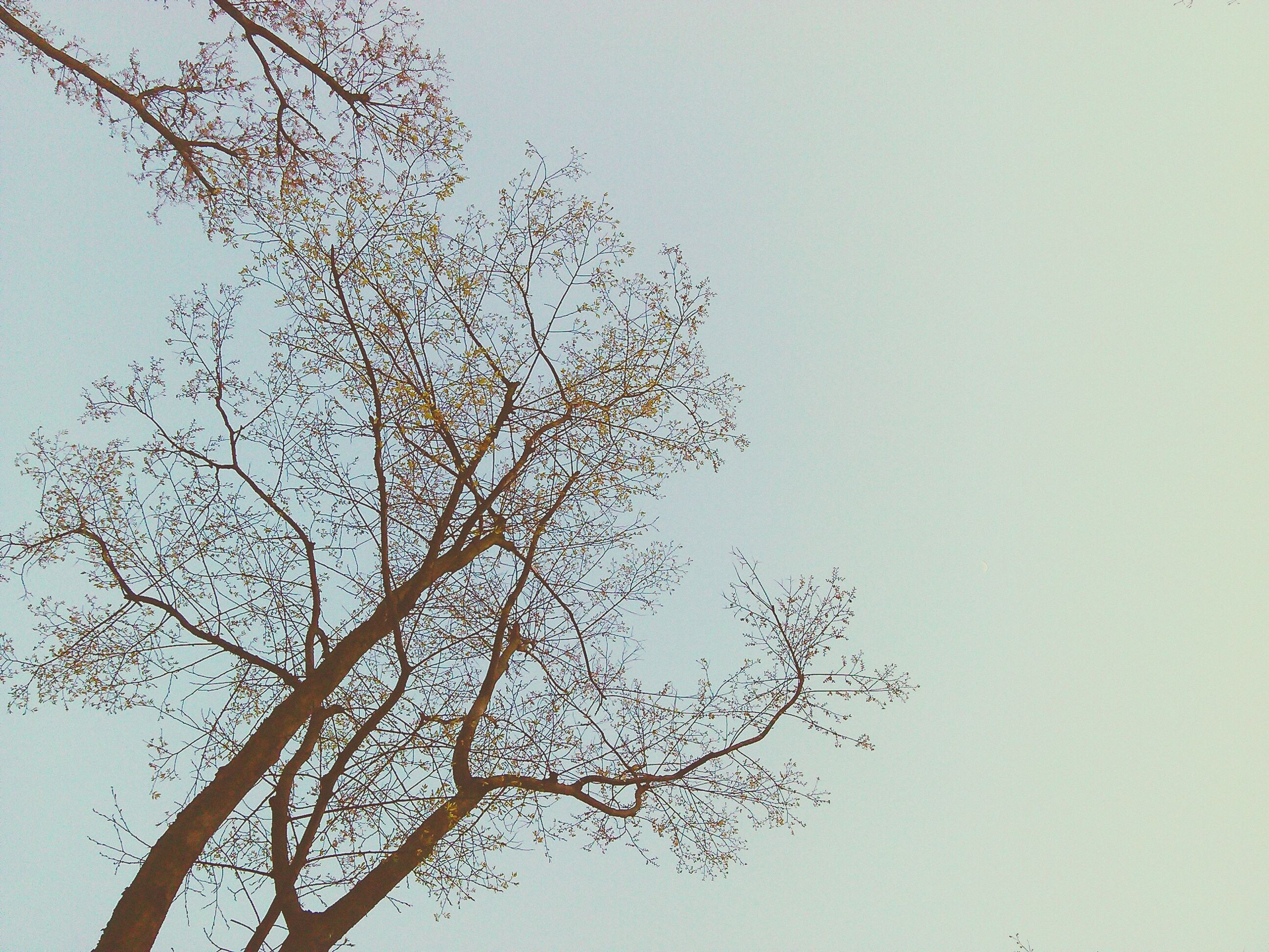 tree, branch, nature, low angle view, clear sky, beauty in nature, tranquility, no people, outdoors, growth, sky, day
