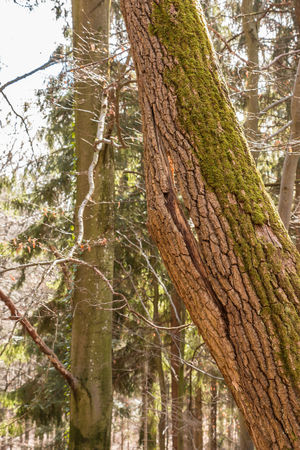 Damaged tree in the middle of the forest Bark Branch Close-up Day Focus On Foreground Forest Growth Land Low Angle View Moss Nature No People Outdoors Plant Plant Bark Rainforest Textured  Tranquility Tree Tree Trunk Trunk WoodLand