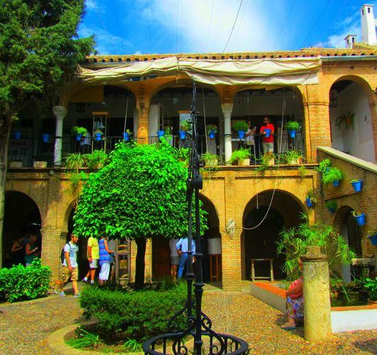Architecture City Cityscape Cityscapes Cordoba Spain Córdoba Day Decoration Green Color Holiday Patio Patios De Córdoba Plant Plant SPAIN Streetphotography Travel Traveling Vacances