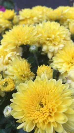 Blumen Freude zum anschauen Ungefiltert Flowering Plant Flower Vulnerability  Yellow Fragility Flower Head Freshness First Eyeem Photo