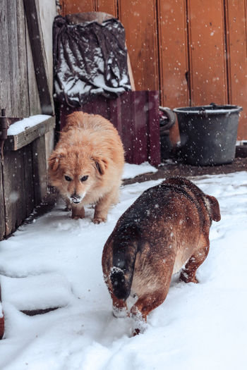 Dogs in snow covered with dog