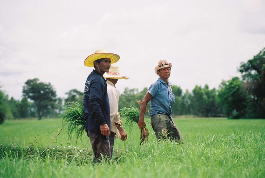 jasmine rice farming Agriculture Bonding Care Carefree Childhood Cowboy Cowboy Hat Farmer Field Full Length Grass Happiness Hat Jasmine Rice Farming Males  Men Motion Nature Rural Scene Straw Hat Sun Hat Togetherness Two People