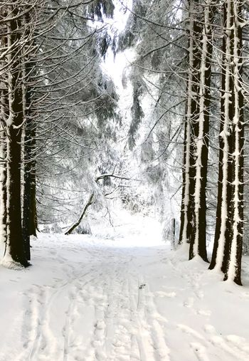 Wasserkuppe.exe 2 Wasserkuppe Germany Snow Winter Cold Temperature Tree Nature Weather White Color Beauty In Nature Day Frozen Outdoors Tranquility Forest No People Tranquil Scene Landscape Scenics Branch Shades Of Winter