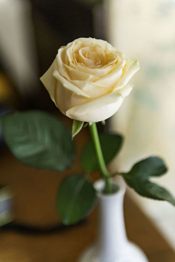 Close-Up Of Peach Rose In Vase On Table