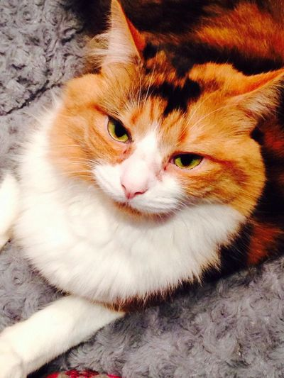 Catsnap