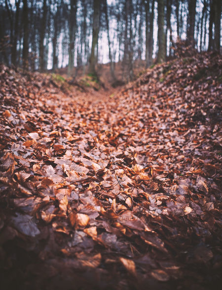 Deciduous forest in late autumn Autumn Bavaria German Steigerwald Abundance Autumn Beauty In Nature Change Day Deciduous Forest Dry Fallen Forest Germany Landscape Leaf Nature No People Outdoors Scenics Tranquil Scene Tranquility Tree Tree Trunk WoodLand Woods