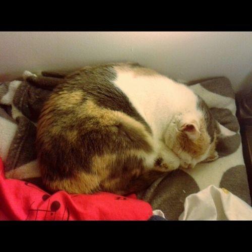 I moja doktorica pazi na mene :-). Babe Cats Love Myguardianangel