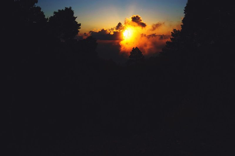 Nature Sun Sunset Beauty In Nature Sky No People Forest