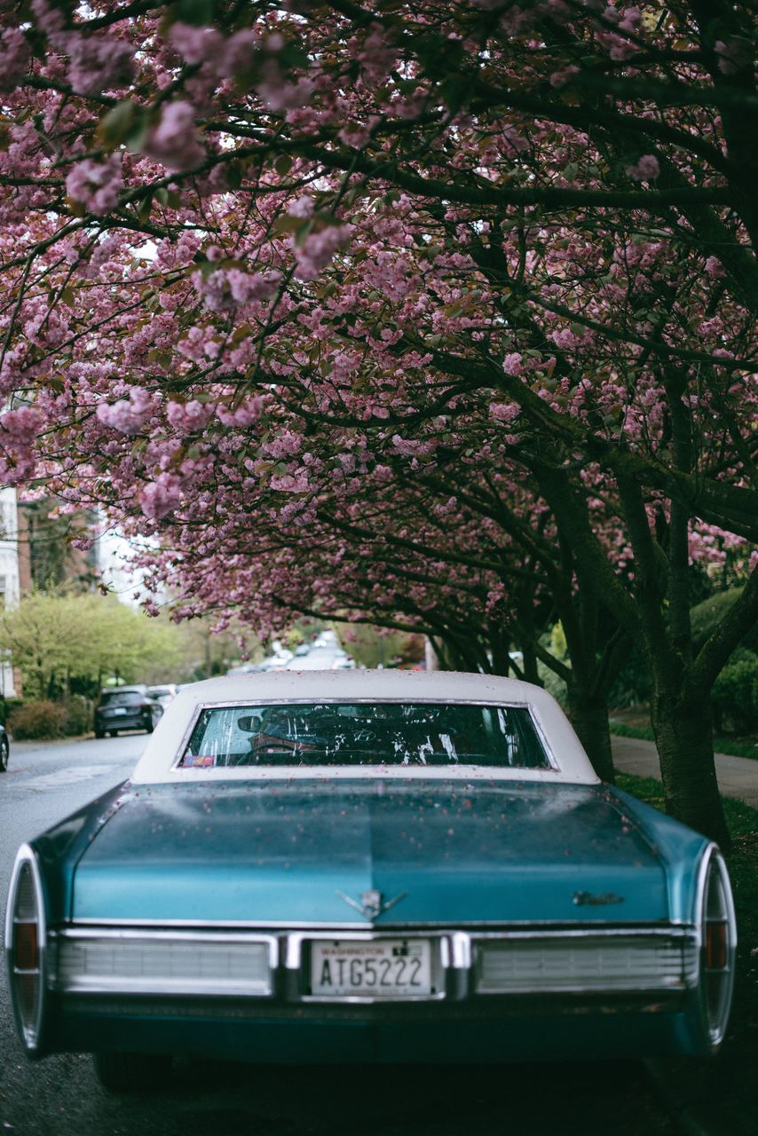 tree, flower, car, growth, no people, blossom, transportation, day, outdoors, springtime, land vehicle, branch, nature, fragility, beauty in nature, sky, freshness