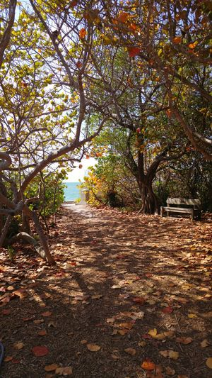 Foliage Nature Nature Photography Path Miami Key Biscayne Escape From Reality Paradise Photography Trip Photo Sightseeing Landscape Hello World Tour Colour Of Life
