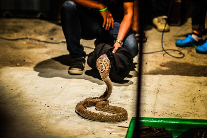 Lifestyles Snake Snake Eyes Snake Head Snake ♥ Snakebites Snakeface Snakes Snakeskin Snakesofinstagram