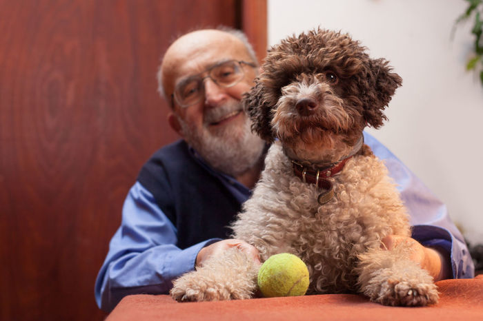 old man with his dog Happy Home Love Background Ball Companion Dog Domestic Animals Eyeglasses  Friend Friendship Home Interior Indoors  Lagotto Romagnolo Leisure Living Room Looking At Camera Mammal Pensioner People Pets Portrait Senior Adult Senior Men Sitting