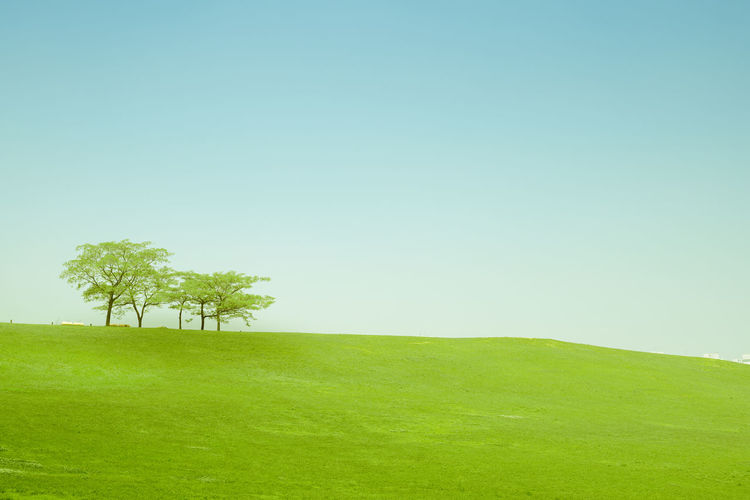Trees on field against clear sky