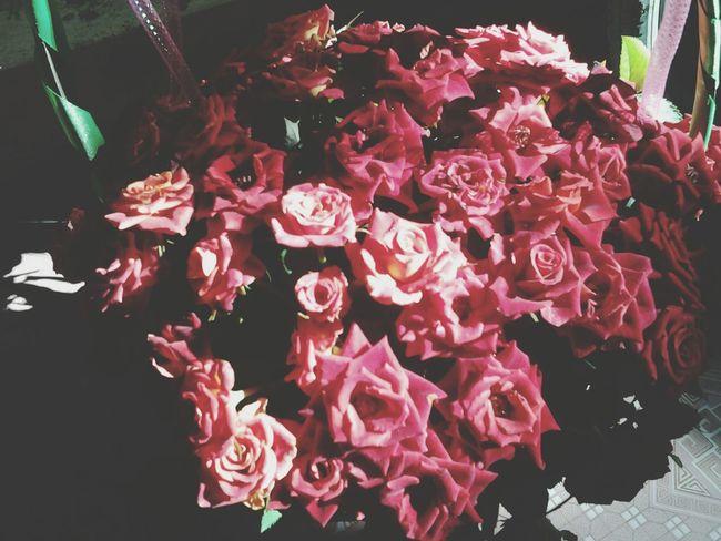Enjoying Life Rose🌹 Flowers Photographer Onephotonelife Sunny Flower Collection Insundaymorning Great View Beautiful Nature