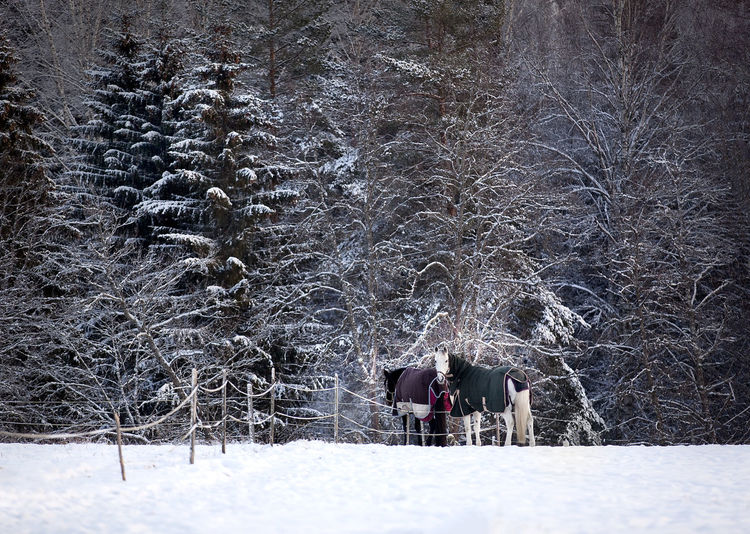 Snow Winter Cold Temperature Tree Land Real People Nature Plant Field Walking Forest Covering Clothing Rear View Leisure Activity Group Of People Bare Tree Beauty In Nature White Color Warm Clothing Outdoors Extreme Weather Snowing Holiday Moments
