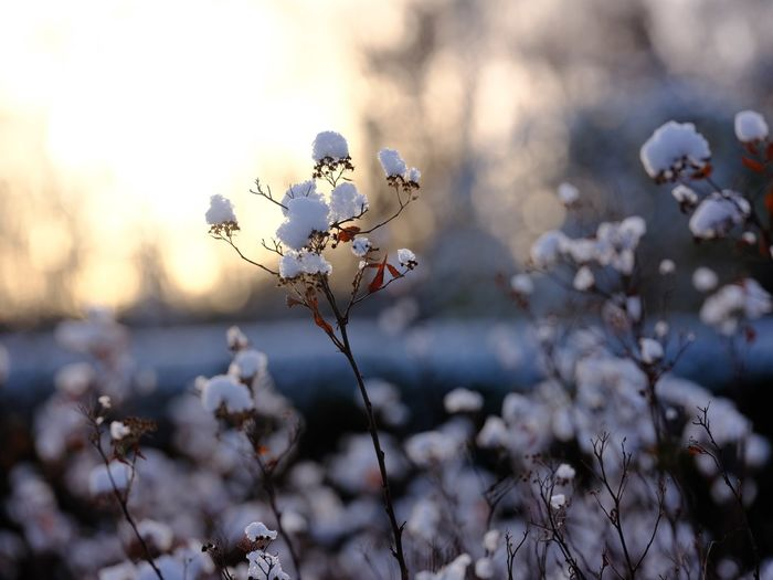 Close-up of cherry blossoms on field
