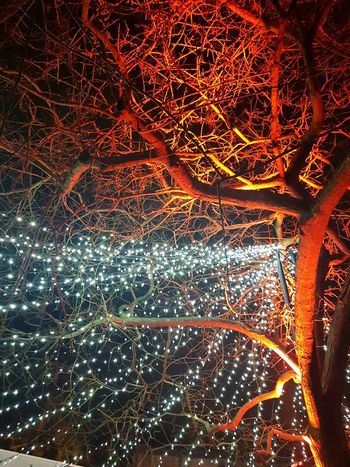 Tree Lights Illuminated Abstract No People Pattern Backgrounds Night Full Frame Outdoors