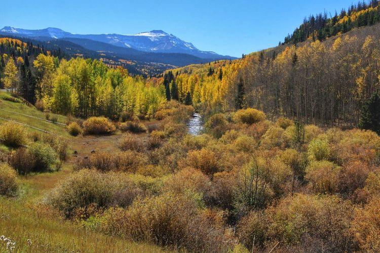 Autumn Colors Yellow Leaves Aspens Aspen Fall Colors Fall Beauty Fall Leaves Yellow Autumn Colorado