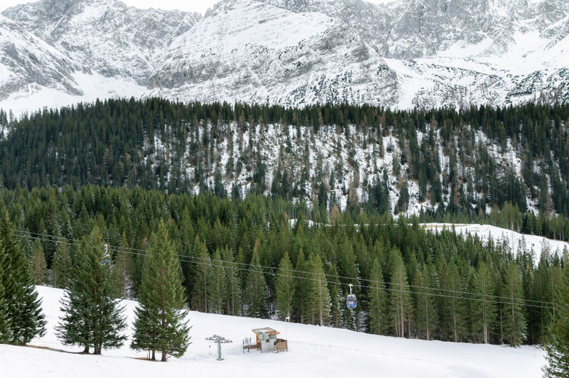 Panoramic View Of Pine Trees On Snowcapped Mountains