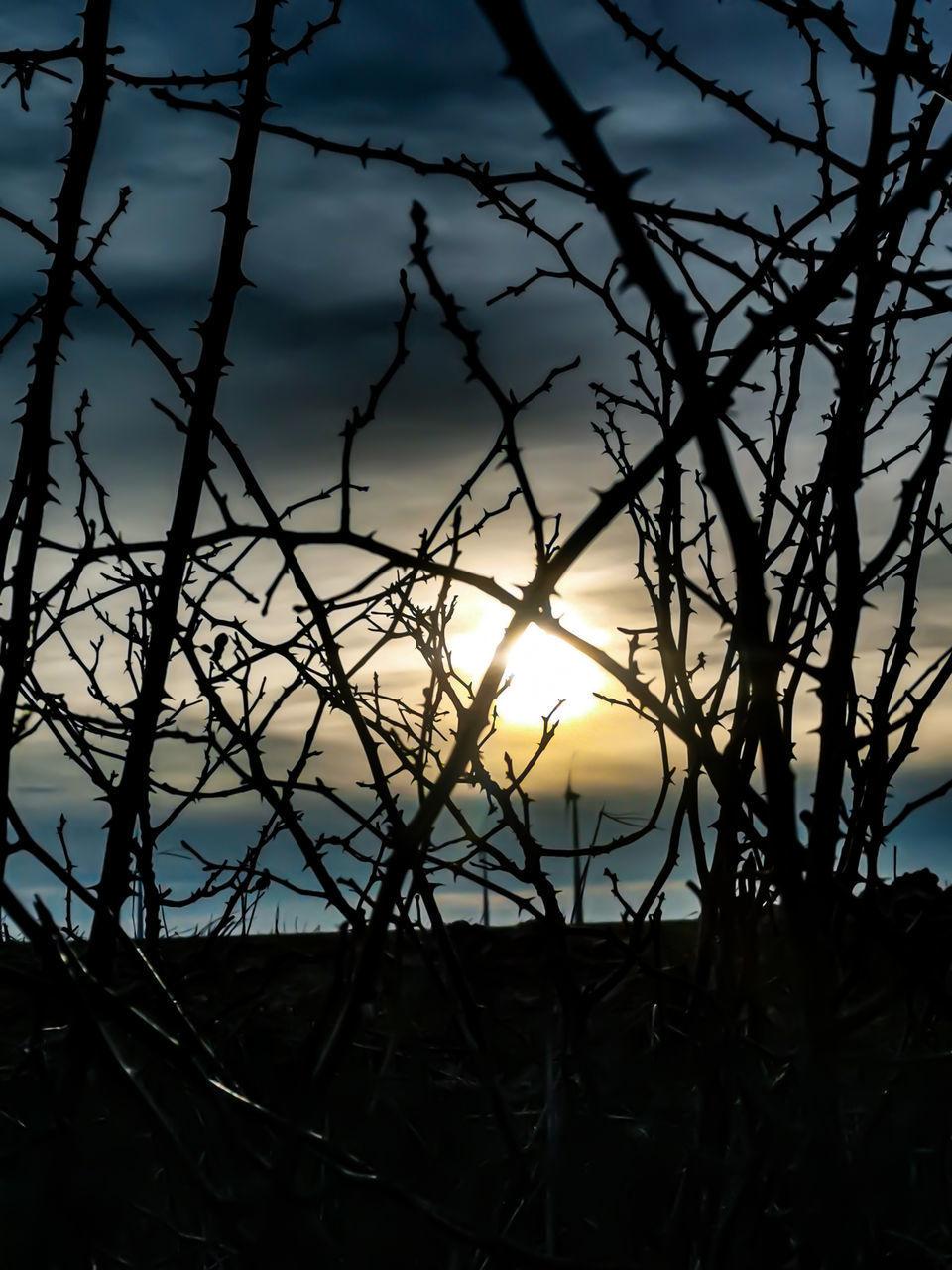 SILHOUETTE BARE TREE AGAINST ORANGE SKY