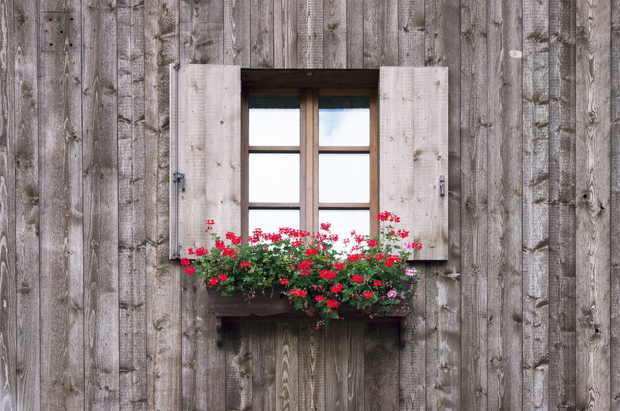Architecture Barn Beauty In Nature Day Dolomites Flower Flower Head Fragility Freshness Growth Italy Nature Pink Color Plant Travel Window Wood