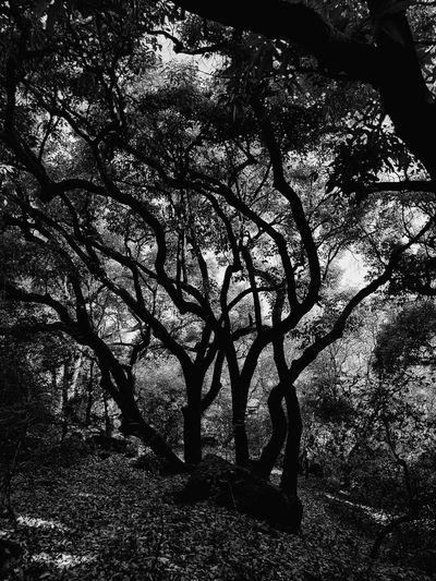Silhouette tree on field in forest