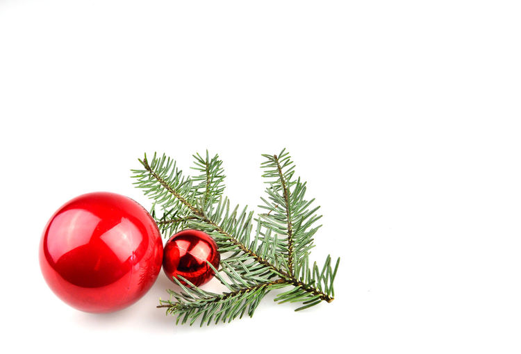 Close-up of christmas tree against white background