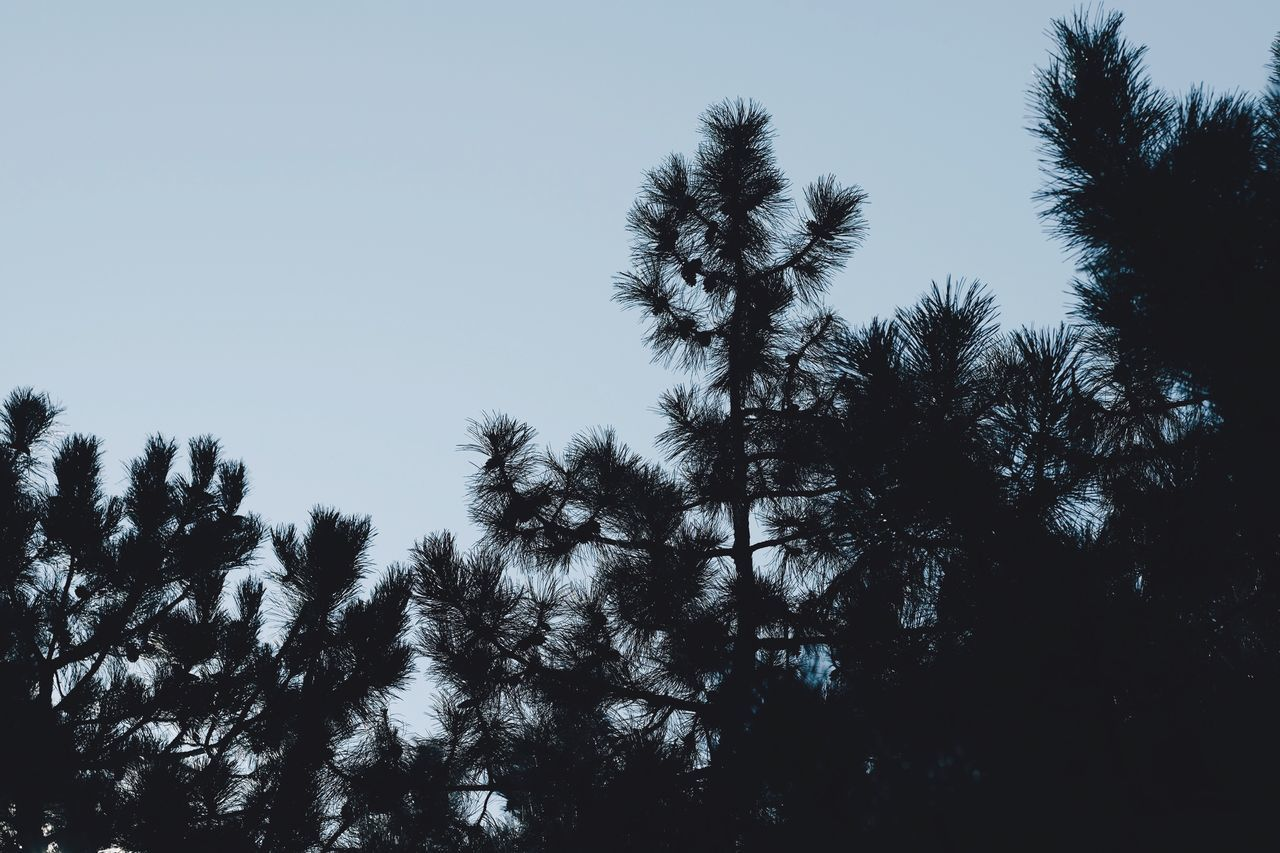 tree, nature, clear sky, low angle view, growth, beauty in nature, no people, tranquility, outdoors, sky, day, scenery, height