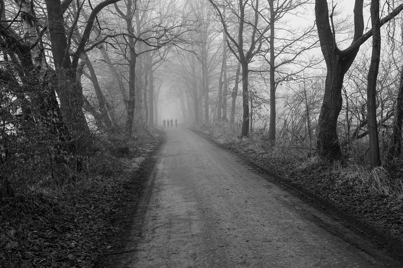 Foggy winter day Nature Outdoors Autumn No People Sky Beauty In Nature Single Lane Road Branch Day