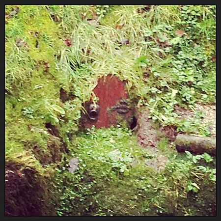 Is this where the fairies live?!! Taking Photos Wood Exploring Woods Wooky Hole Caves Somerset Enchanted  Fairies