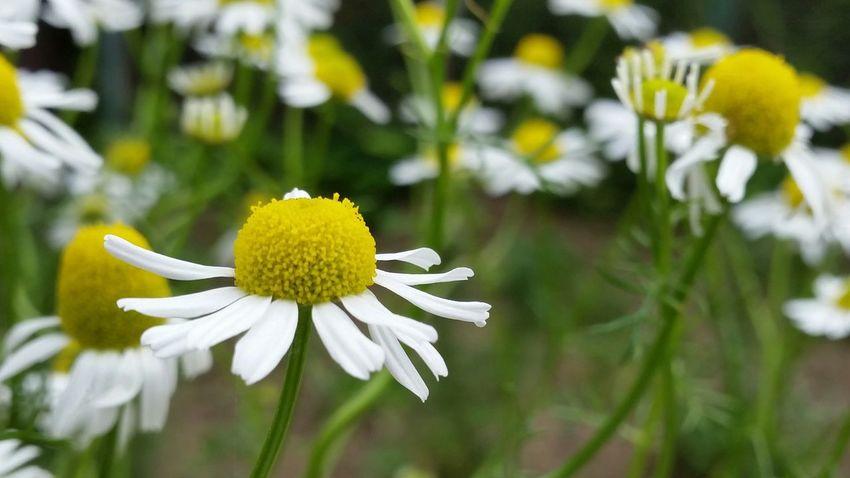 Nature_perfection Eyemnaturelover Nature Spring Flowers 🌷 Flowers 🌹 Flowers_collection Taking Photos Enjoying Life Happy Sunday Nature_collection