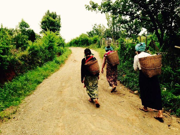 Hmong Burma People Myanmar Trekking Hilltribe EyeEmNewHere Basket Plant Tree Rear View Walking Container Full Length