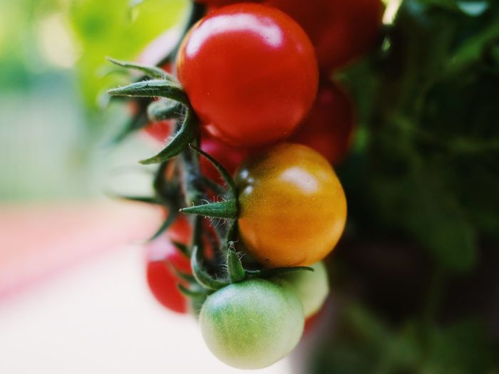Cherry Tomatoes Close-up Day Focus On Foreground Food Food And Drink Freshness Fruit Green Color Growth Healthy Eating Nature No People Outdoors Plant Red Ripe Selective Focus Tomato Vegetable Wellbeing