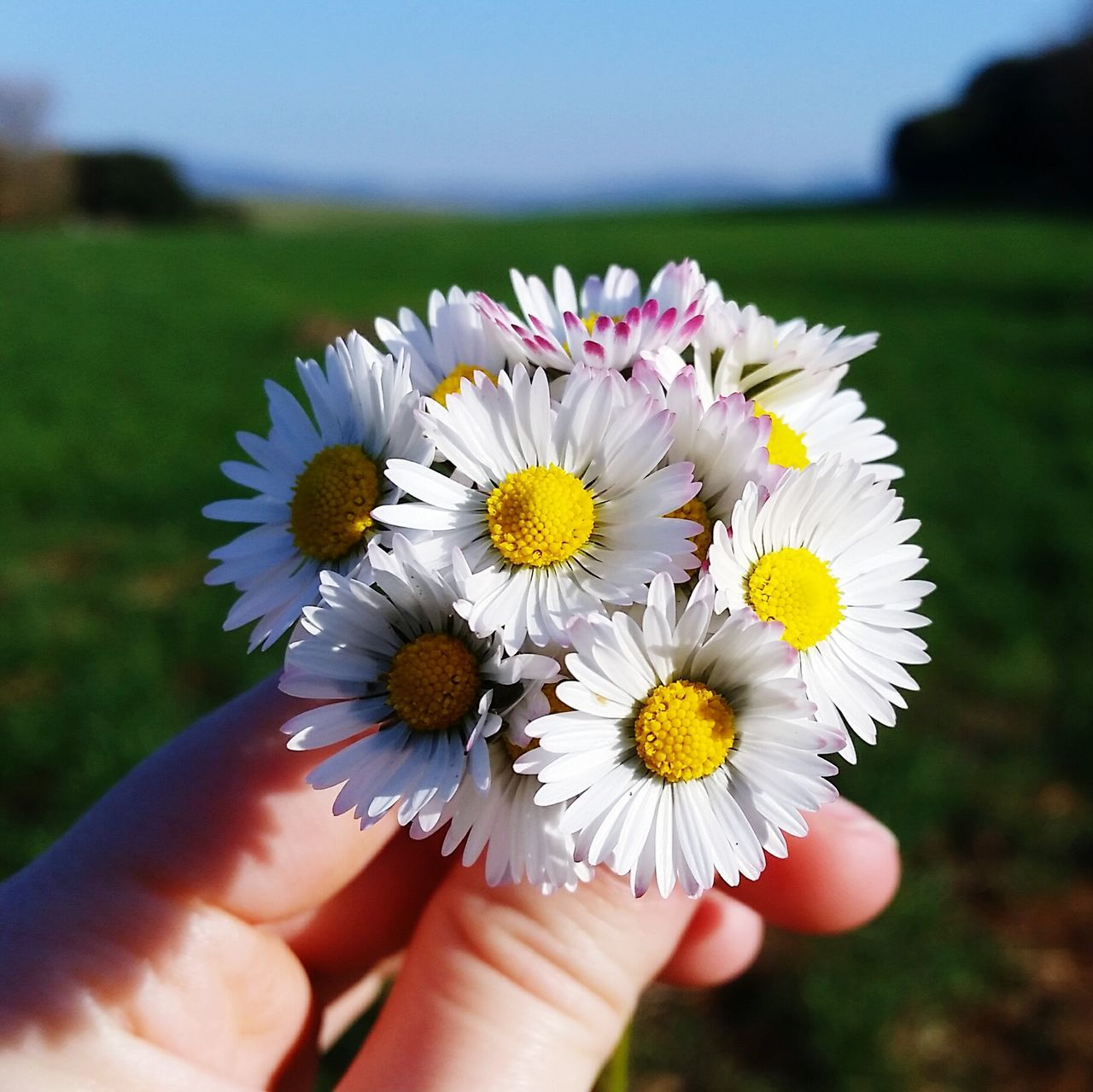flower, human hand, real people, beauty in nature, one person, yellow, fragility, petal, nature, human body part, freshness, focus on foreground, outdoors, flower head, close-up, unrecognizable person, day, holding, pollen, plant, people