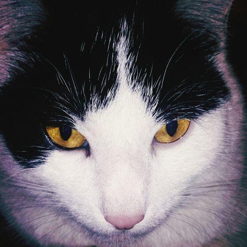 Chat Cat Ma Chatte Lubrique