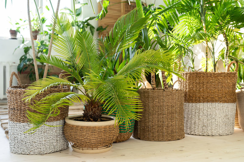 Potted plants in basket