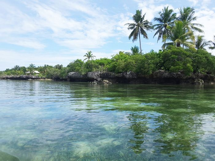coconut trees Beautifull Island Blue Water Clear Water Beach Wakatobi Seagrass, Rocks, Sun, Sea And The Sky Rock Formation Beautifullandscapes