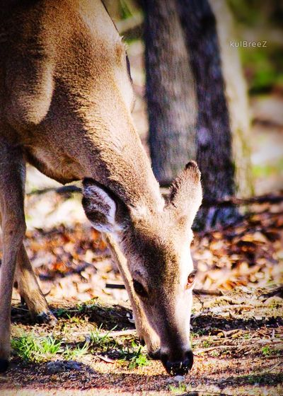 Hello (again) Dolly! Spring Siezetheday Nature Is Perfect Tranquil Morning Doe A Deer Trusting Beast Day Close-up Outdoors Low Section