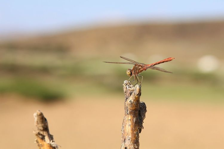 Close-up of grasshopper on land